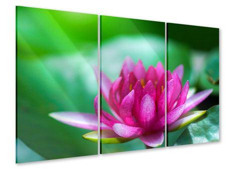 Acrylglasbild 3-teilig Lotus in Pink