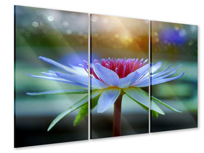 Acrylglasbild 3-teilig Pretty Lotus