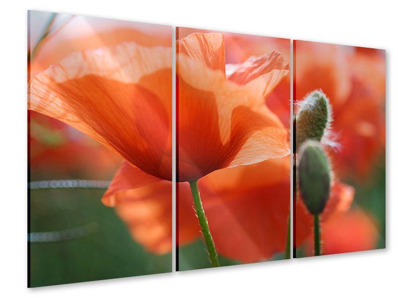Acrylglasbild 3-teilig Klatschmohn XXL