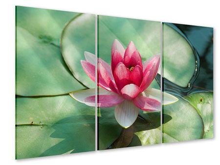 Acrylglasbild 3-teilig Der Frosch und das Lotusblatt