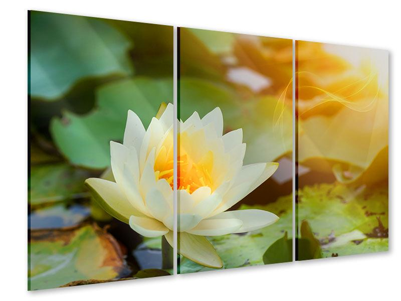 Acrylglasbild 3-teilig Romantische Seerose