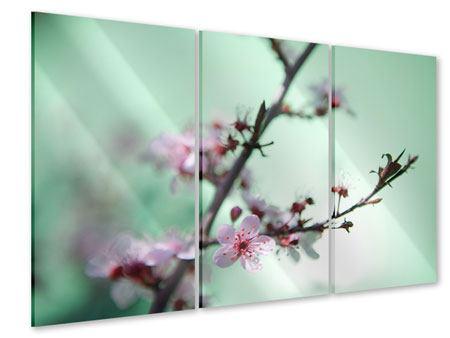 Acrylglasbild 3-teilig Die japanische Kirschblüte