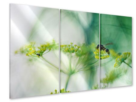 Acrylglasbild 3-teilig XXL Pastinak