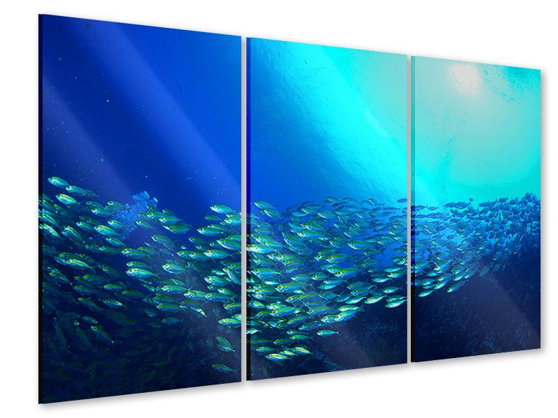 Acrylglasbild 3-teilig Fischschwarm