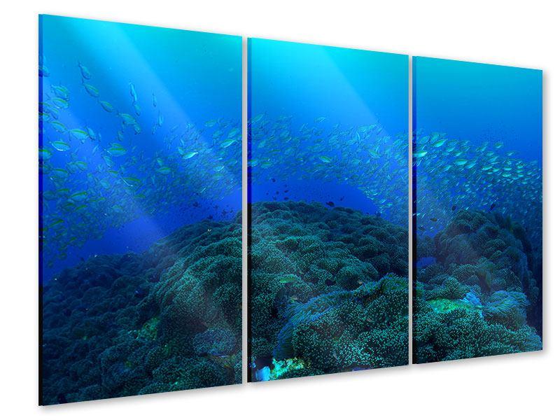 Acrylglasbild 3-teilig Fischschwärme