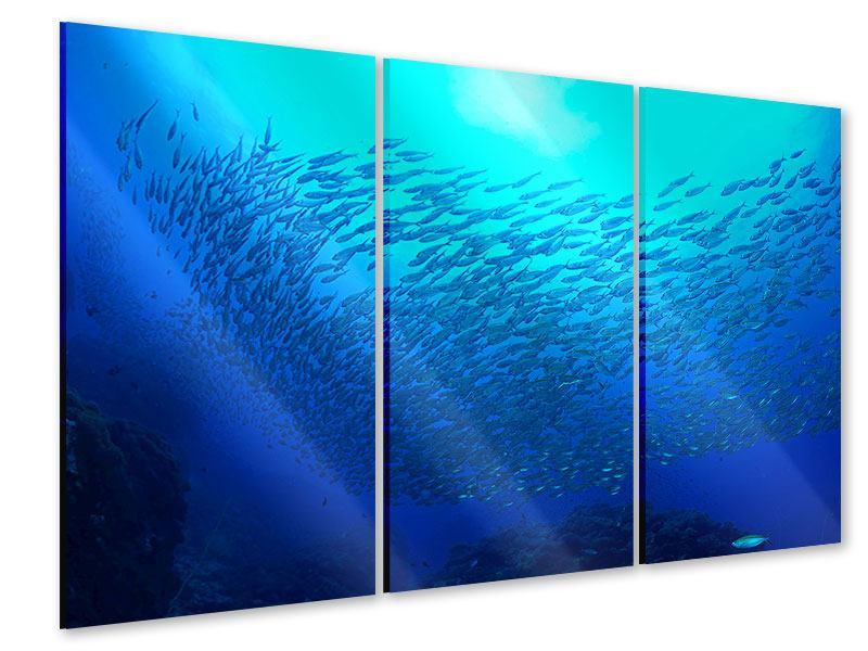 Acrylglasbild 3-teilig Fischwelt