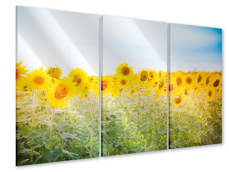 Acrylglasbild 3-teilig Im Sonnenblumenfeld
