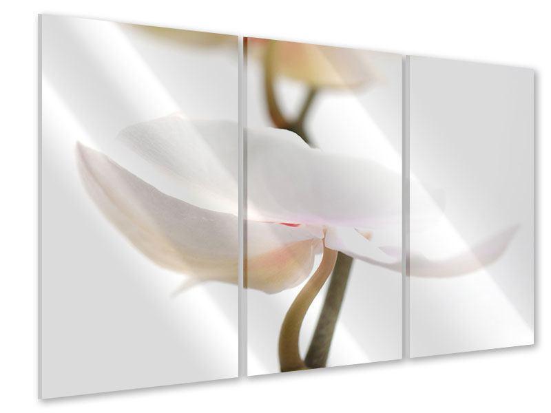 Acrylglasbild 3-teilig XXL Orchideenblüte