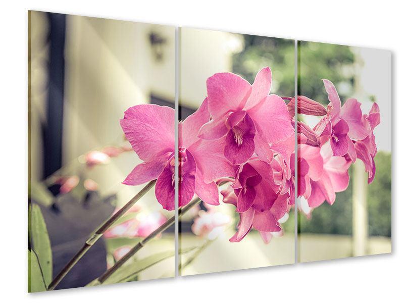 Acrylglasbild 3-teilig Ein Fensterplatz für die Orchideen