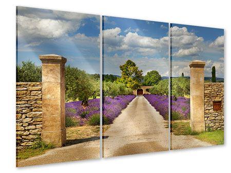 Acrylglasbild 3-teilig Lavendel-Garten