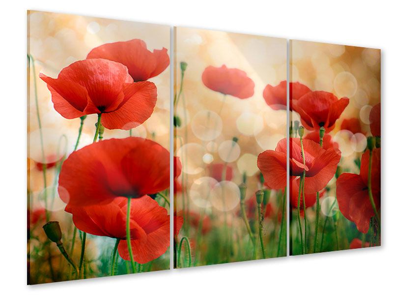 Acrylglasbild 3-teilig Der Klatschmohn