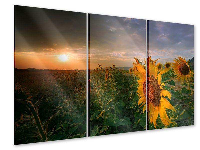 Acrylglasbild 3-teilig Sonnenblumen im Lichtspiel