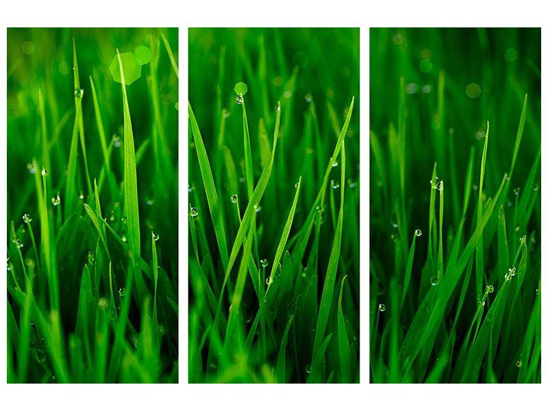Acrylglasbild 3-teilig Gras mit Morgentau