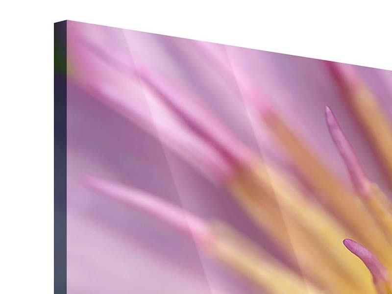 Acrylglasbild 3-teilig XXL-Lotus