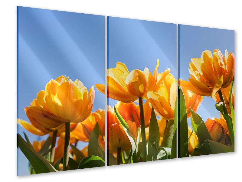 Acrylglasbild 3-teilig Märchenhafte Tulpen