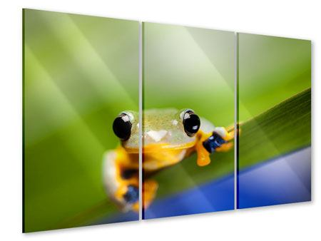 Acrylglasbild 3-teilig Frosch XXL