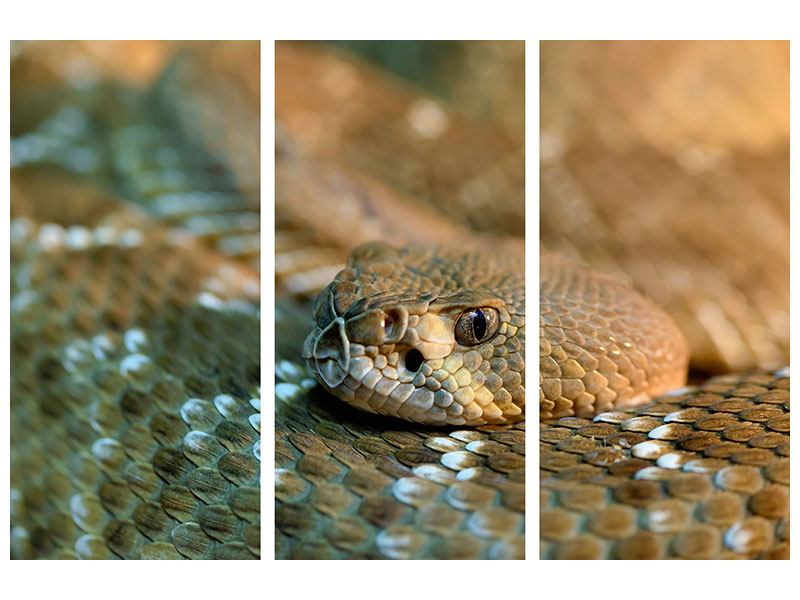 Acrylglasbild 3-teilig Viper