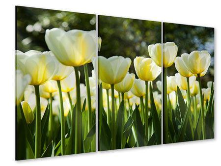 Acrylglasbild 3-teilig Tulpen bei Sonnenuntergang