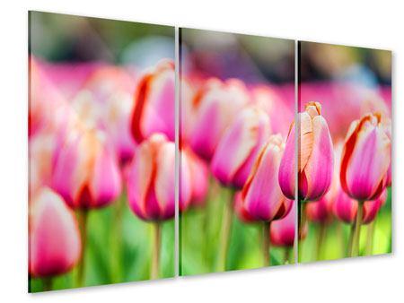 Acrylglasbild 3-teilig Pretty in Pink