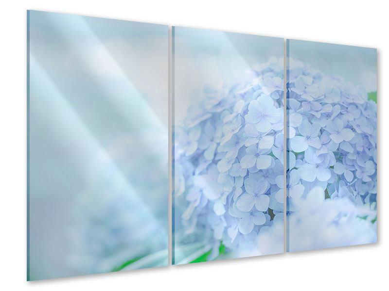 Acrylglasbild 3-teilig Die Hortensie