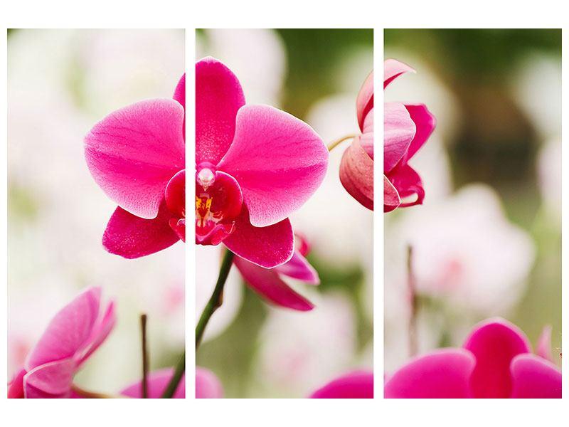 Acrylglasbild 3-teilig Perspektivische Orchideen