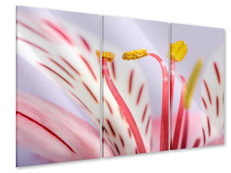 Acrylglasbild 3-teilig Close Up Die exotische Schönheit