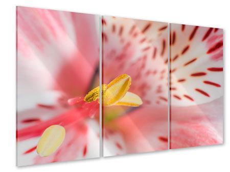 Acrylglasbild 3-teilig Der Lilienstempel