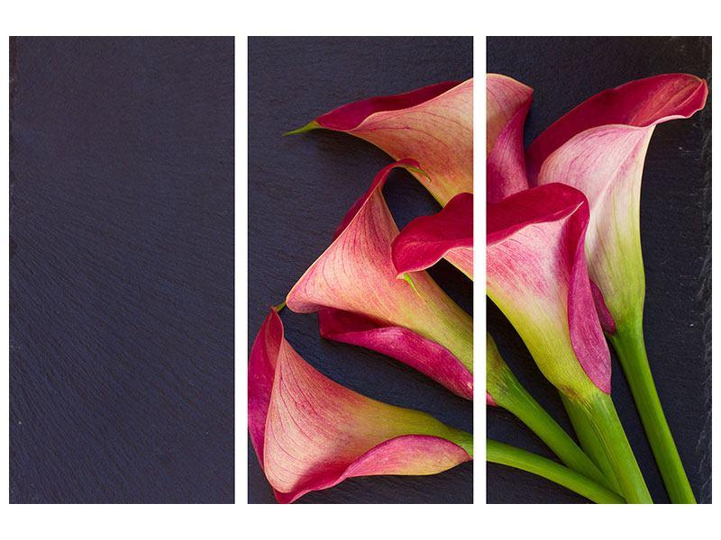 Acrylglasbild 3-teilig Callastrauss