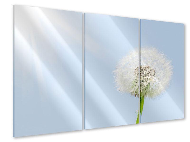 Acrylglasbild 3-teilig Der Löwenzahn im Sonnenstrahl