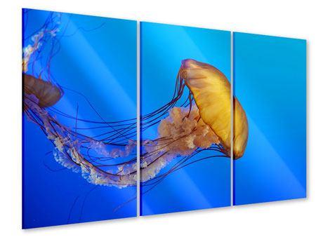 Acrylglasbild 3-teilig Medusa