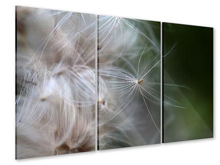 Acrylglasbild 3-teilig Close up Blütenfasern