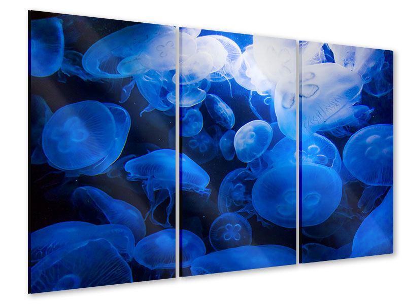 Acrylglasbild 3-teilig Quallen
