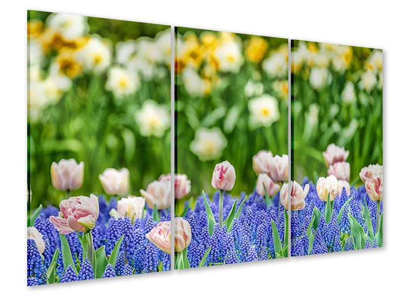 Acrylglasbild 3-teilig Ein Garten mit Tulpen
