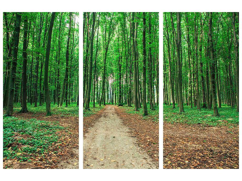 Acrylglasbild 3-teilig Tannenwald