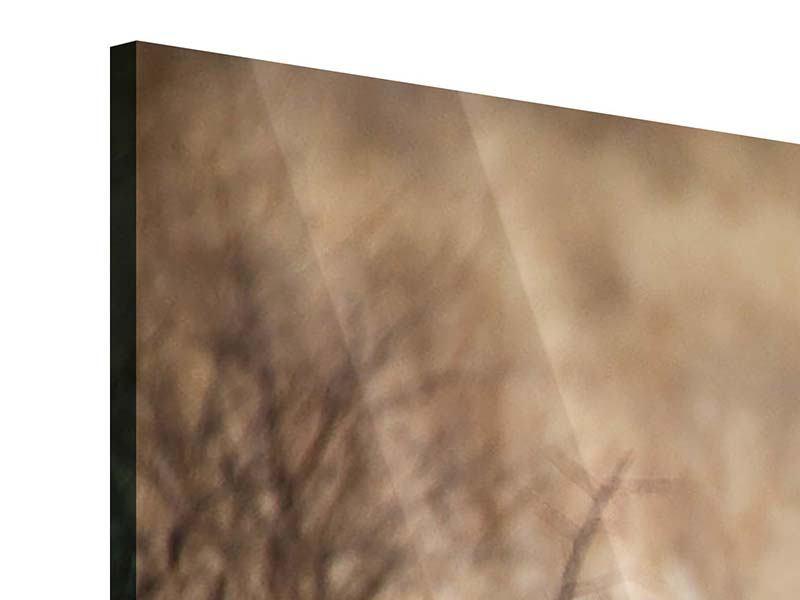 Acrylglasbild 3-teilig Eleganter Gepard