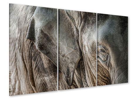 Acrylglasbild 3-teilig Close Up Elefant