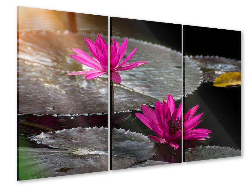 Acrylglasbild 3-teilig Seerosen im Morgentau