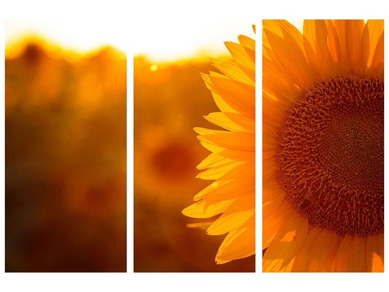 Acrylglasbild 3-teilig Macro-Sonnenblume