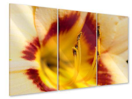 Acrylglasbild 3-teilig Riesenlilie