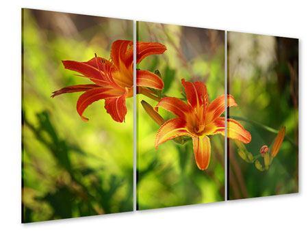 Acrylglasbild 3-teilig Lilien in der Natur