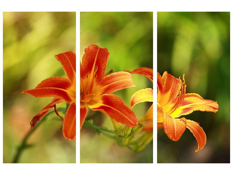Acrylglasbild 3-teilig Natural Lilien