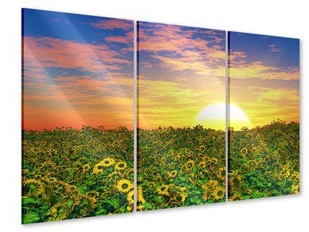 Acrylglasbild 3-teilig Blumenpanorama bei Sonnenuntergang