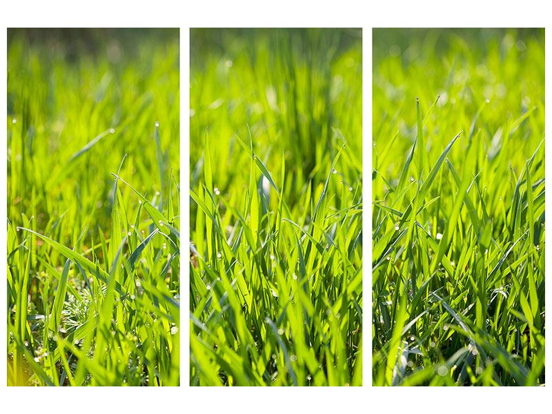 Acrylglasbild 3-teilig Gras im Morgentau