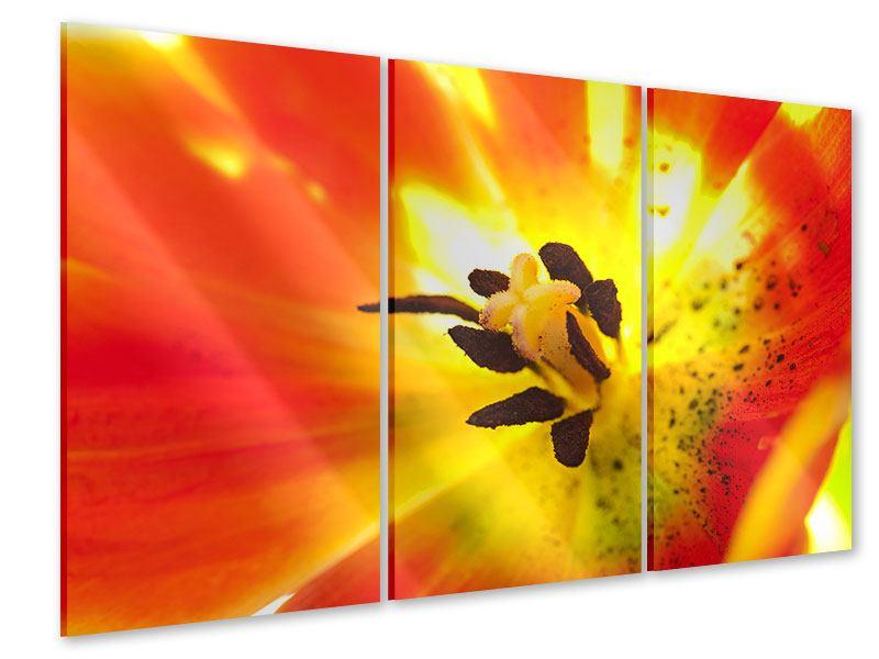 Acrylglasbild 3-teilig Die Narbe einer Tulpe XXL