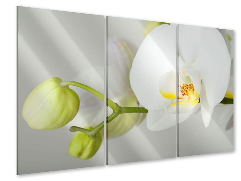 Acrylglasbild 3-teilig Riesenorchidee