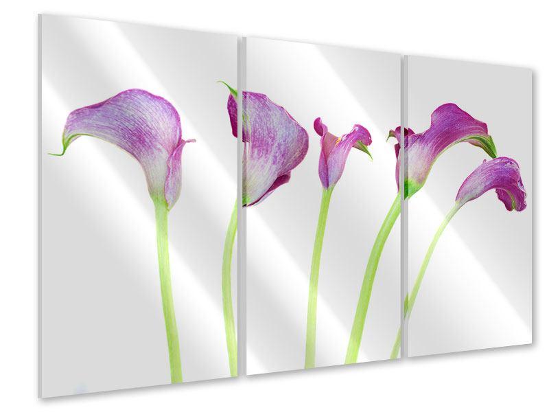 Acrylglasbild 3-teilig Callas in Lila