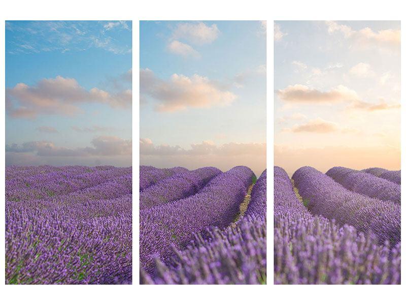 Acrylglasbild 3-teilig Das blühende Lavendelfeld