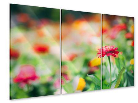 Acrylglasbild 3-teilig Im Blumengarten