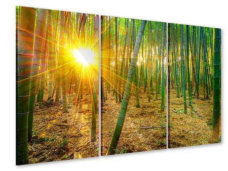 Acrylglasbild 3-teilig Bambusse