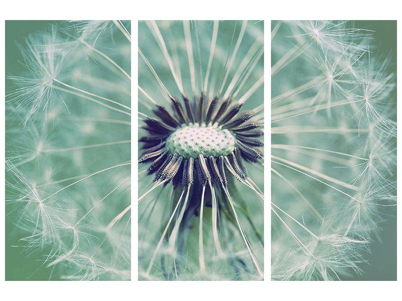 Acrylglasbild 3-teilig Close Up Pusteblume